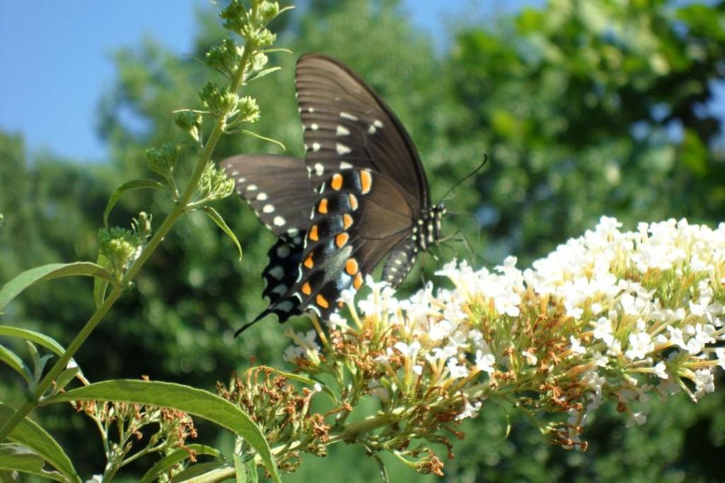 Butterfly_1076x717