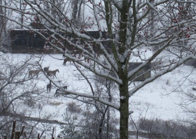 Horses enjoying snow