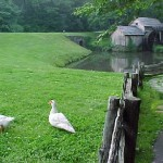 Today Mabry Mill is the most photographed spot on the Blue Ridge Parkway.