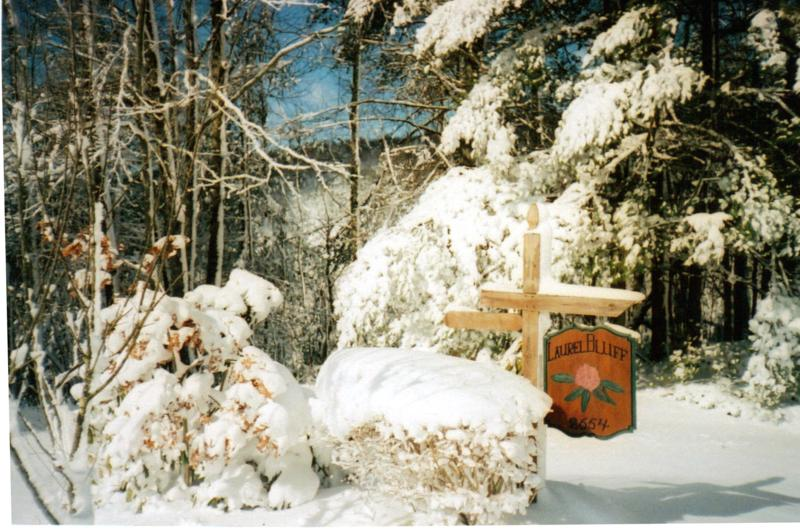 winter1_800x530